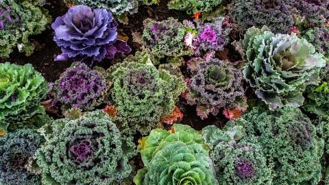 Alimentation détox choux légumes verts et fruits riches en antioxydants vitamines et oligoéléments. Pollution intérieure